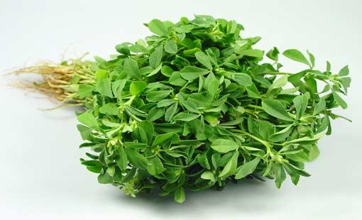 «الحُلْبة» نبتة خضراء متعددة الاستخدامات