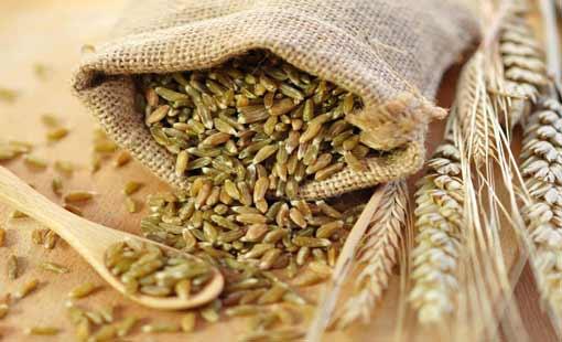 القمح والبرغل