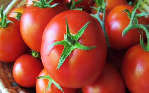 أهم 10 من فوائد الطماطم