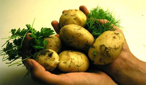 البطاطا في حميتك