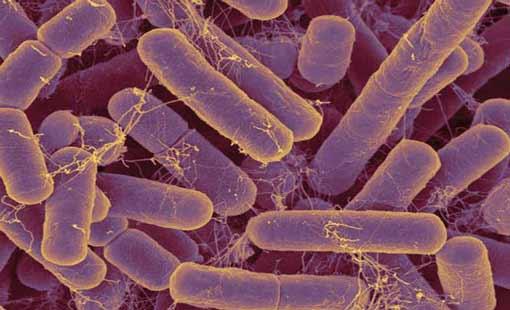 علاج الأمراض بــ«الميكروبات»