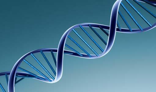 ما هو الأكثر أهمية.. الوراثة أم التربية؟