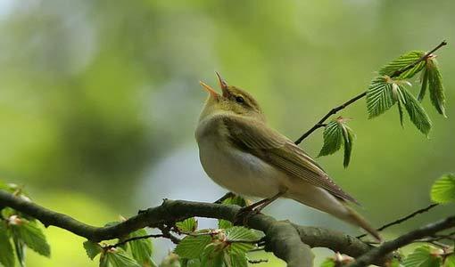 لندع الطيور تغني