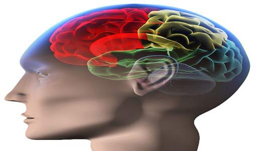 دماغ المرأة ودماغ الرجل وأثرهما على الصمت