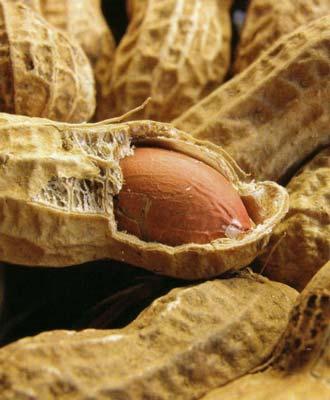 الفول السوداني مفيد لصحة القلب