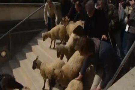 الخراف تغزو متحف اللوفر