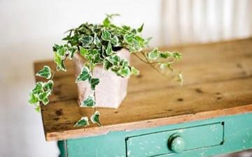 المساحات الخضراء في حياتكم الأسرية