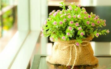 زهور الصحة