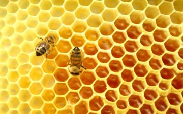 العسل.. مصدر هام للتغذية
