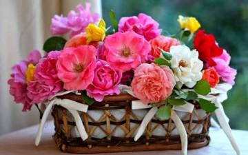 أسرار الزهور بين يديك