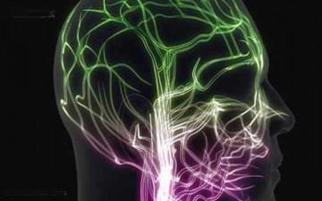الدماغ مسؤول عن موعد راحة الإنسان