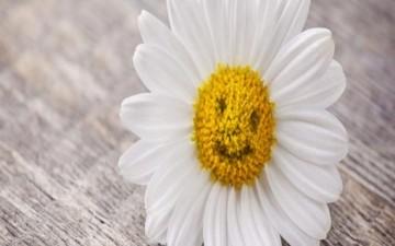 سر السعادة.. الابتسامة