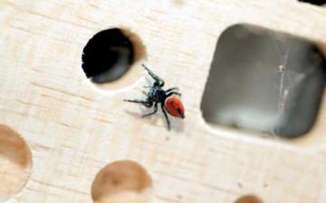 نفرتيتي.. أول رائدة فضاء عنكبوتية