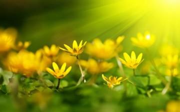 التفاؤل مبعث الأمل والحياة