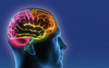 تعلُّم اللغات.. ينشط الدماغ والأعصاب