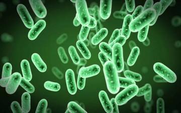 البكتيريا.. صراع داخل جسمك
