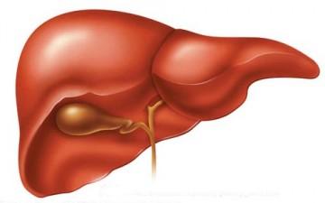 الكبد الدهنية.. مرض خطير ينمو بصمت