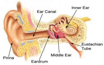 انسداد الأذن الشمعي: زيارة الطبيب هي الحل