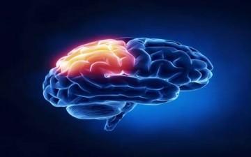 العقل والإدراك العقلي