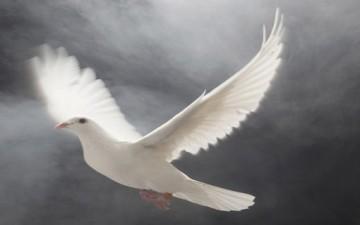 العنف والسلم في معاني الإنسانية وقيمها