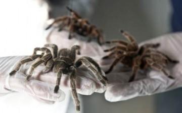 عناكب تقتنص فريستها بإستخدام الكهرباء
