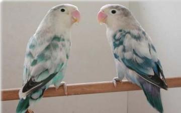 حب وعصافير