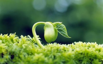 ديننا يدعونا إلى إيجابية الأمل