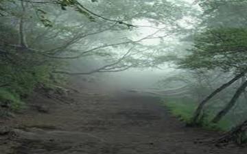 غابة مسحورة في اليابان من يدخلها لا يخرج منها