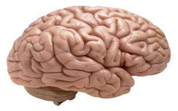الصداع المتكرر قد يدمر خلايا المخ
