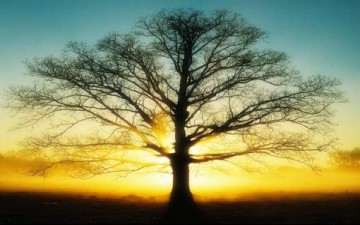 كن مثل الشجرة