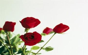رؤى تأملية.. في الحب والجمال