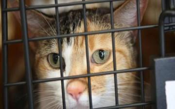 قطة تصل إلى أوروبا في هجرة غير شرعية