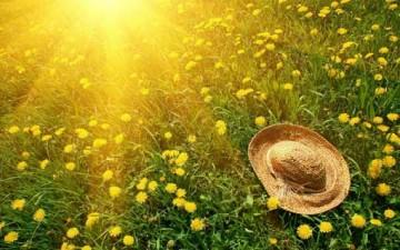 مصادر فيتامين الشمس «D»